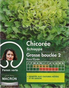 chicoree-schiappa-small